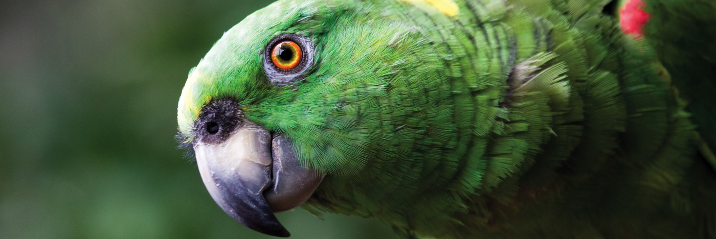 Slider Amazone
