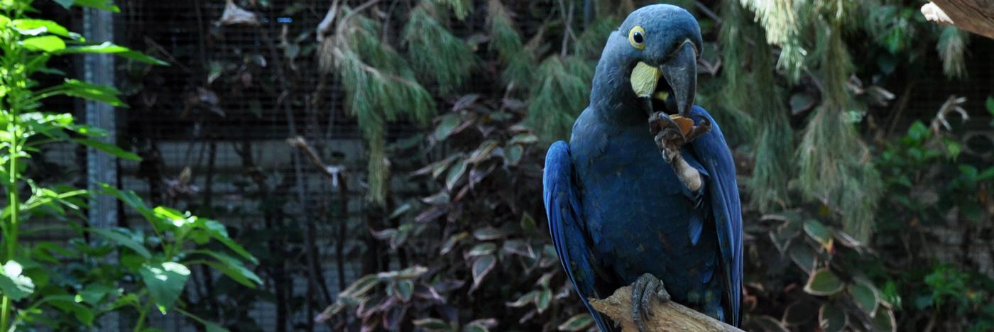 Slider Blauwe Ara